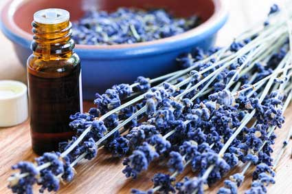 Ätherisches-Öl-Lavendel