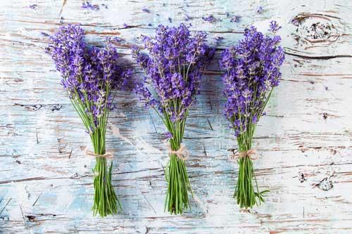 Lavendelblüten (©jag_cz - depositphotos.com)