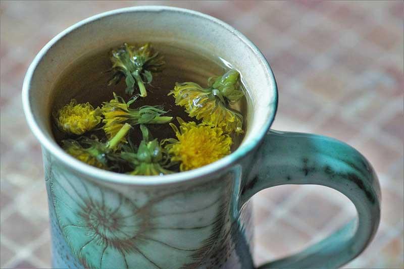 Löwenzahn im Tee