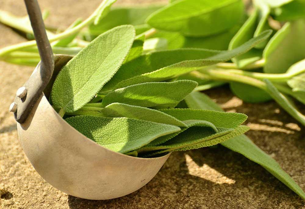 Salbei-Blätter