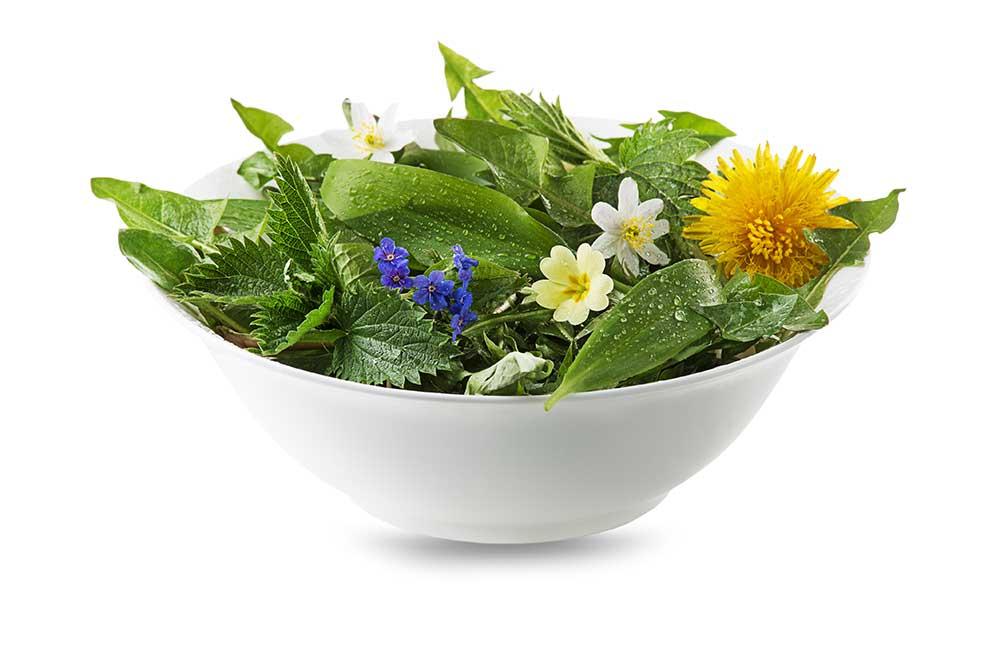 Pissenlits pour la salade
