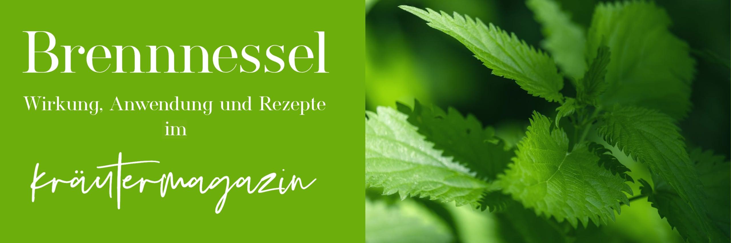 Magazin-Brennnessel-Banner-Copy