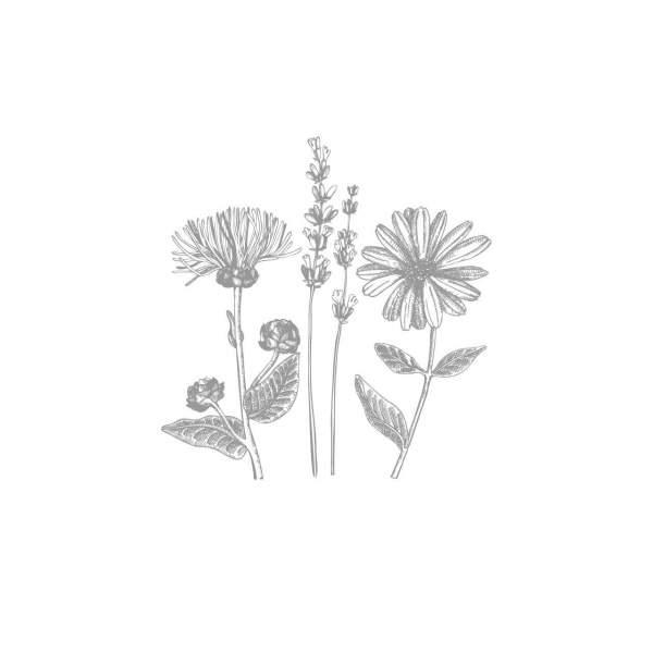Phyllanthuskraut, Chanca Piedra, gemahlen, BIO
